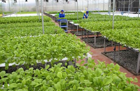 Hoàn thiện chính sách đầu tư để đẩy mạnh ứng dụng công nghệ cao vào nông nghiệp