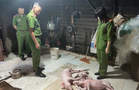 Hà Tĩnh: Quay lợn chết rồi đưa lên bàn nhậu
