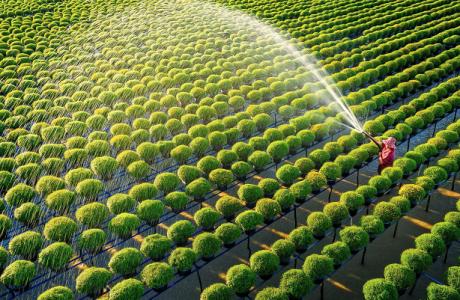 Để thị trường bất động sản nông nghiệp Việt Nam phát triển bền vững