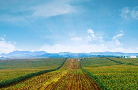 Tập đoàn TH hoàn thành thỏa thuận mua 3 trang trại gia súc ở Australia