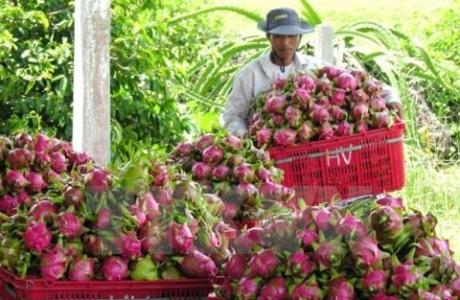 Thái Lan vẫn kỳ vọng vào xuất khẩu trái cây