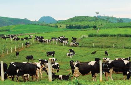 Hợp nhất Mộc Châu Milk có thể giúp thị phần Vinamilk tăng 2,2-2,5%/năm trong 3-5 năm tới