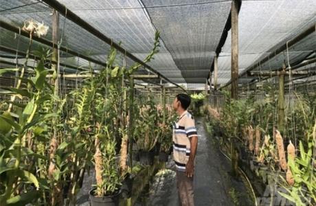 Khởi nghiệp nông nghiệp: Thành tỷ phú nhờ chuyển lúa sang lan