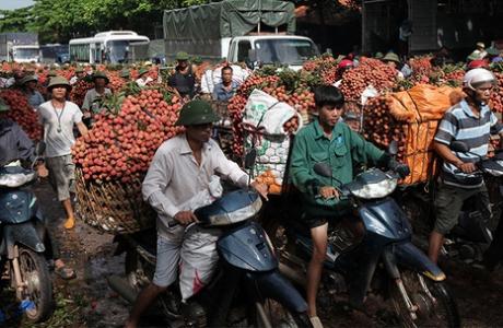 Vải thiều Trung Quốc thắng lớn, lo thế mạnh 6.000 tỉ của Việt Nam gặp khó