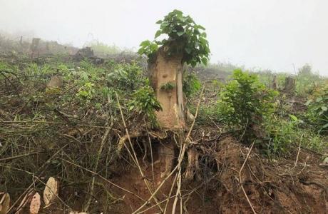 Nghệ An: Sai phạm nghiêm trọng ở các ban quản lý rừng phòng hộ