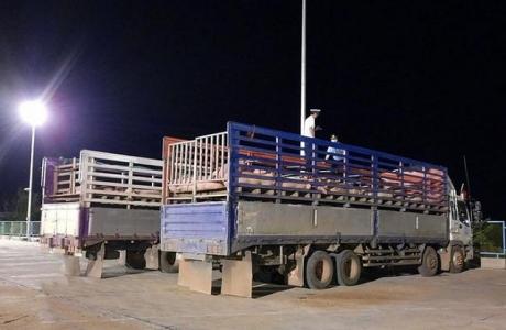 500 con lợn sống nhập từ Thái Lan đã về đến khu cách ly tại Nghệ An