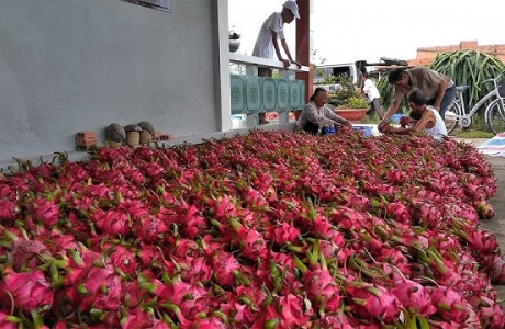 Rau quả Việt rộng đường tiến vào thị trường Trung Quốc, Hồng Kông