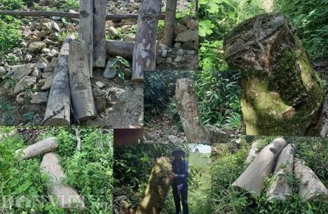 Phú Thọ: Đi tìm nguyên nhân hơn 1.000ha rừng tự nhiên
