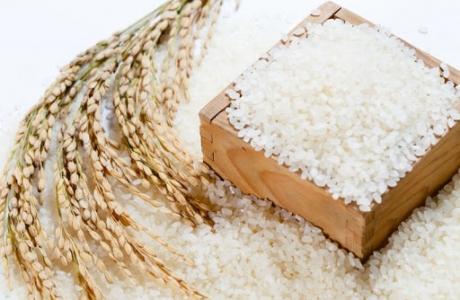 Xây dựng 2 chuỗi liên kết sản xuất tiêu thụ lúa gạo Japonica tại Thủ đô
