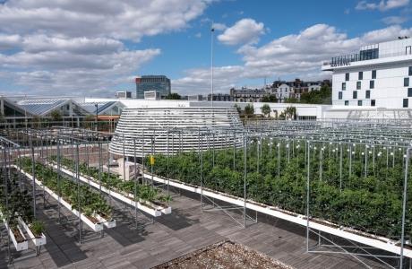 Bên trong nông trại đô thị trên mái nhà lớn nhất thế giới
