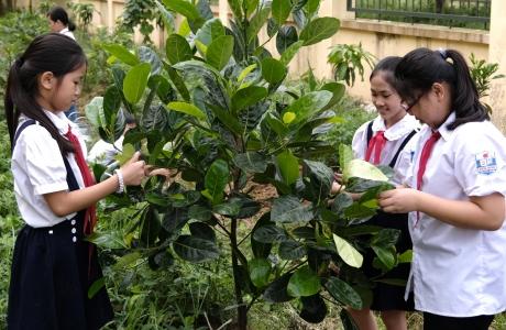 Quỹ 1 triệu cây xanh lan tỏa tình yêu thiên nhiên đến với học sinh
