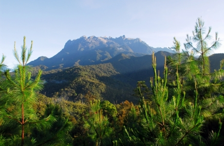 Phát triển rừng bền vững gắn với bảo vệ môi trường