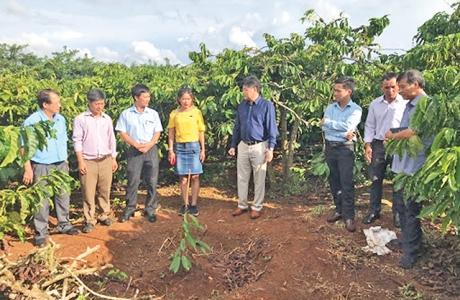 Khuyến nông góp phần quan trọng nâng cao hiệu quả kinh tế vườn