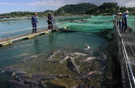 Năm 2030, đặt mục tiêu triệu USD cho giá trị xuất khẩu trứng cá nước lạnh