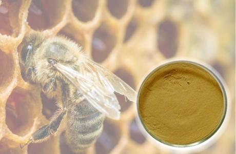Keo ong propolis M.E.D – Khác biệt chiết xuất độc quyền sáng chế từ Italy