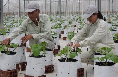 Bắc Ninh: Xây dựng các mô hình sản xuất nông nghiệp lớn theo hướng công nghệ cao