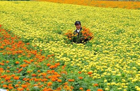 Đồng Tháp: Kết nối sản xuất, tiêu thụ ngành hàng hoa kiểng