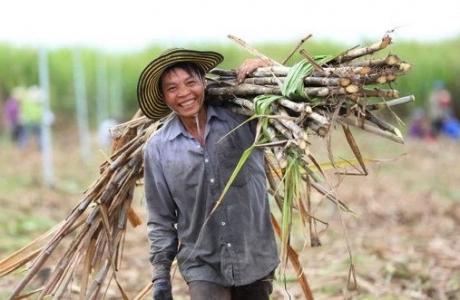 Năm 2021 – Ngành mía đường Việt sẽ
