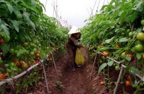 Phát triển nông nghiệp bền vững, nâng cao chất lượng, giá trị gia tăng