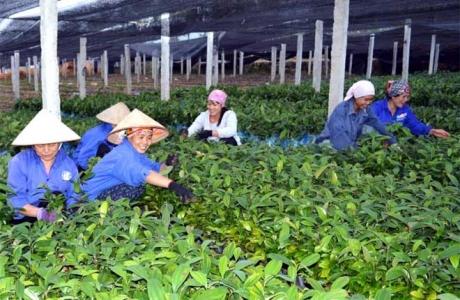 Ðiều kiện sản xuất, kinh doanh giống cây trồng lâm nghiệp