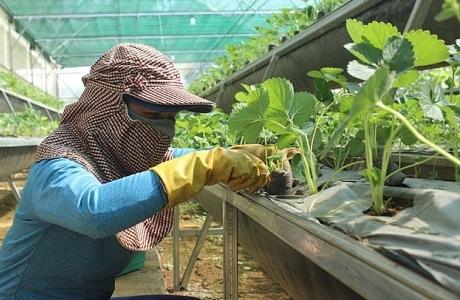 Phú Yên: Bảo đảm an toàn thực phẩm trong lĩnh vực nông nghiệp