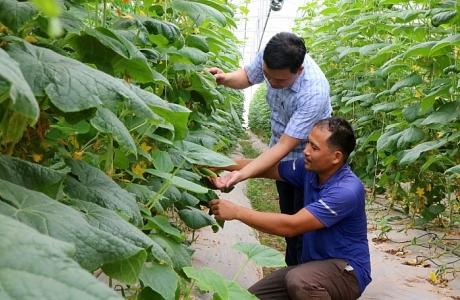 Phú Thọ: Bảo đảm an toàn thực phẩm trong lĩnh vực nông nghiệp năm 2021