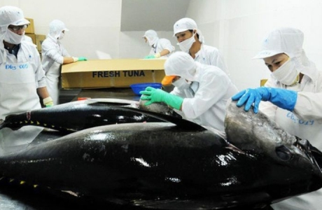 Xuất khẩu mặt hàng cá ngừ của Việt Nam tiếp tục tăng trưởng cao trong tháng 4