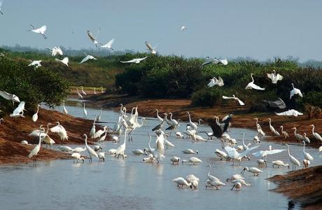 Hành lang pháp lý là xương sống trong việc bảo tồn và phát triển bền vững các vùng đất ngập nước