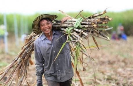 Chính thức áp thuế chống bán phá giá và chống trợ cấp đối với đường mía Thái Lan