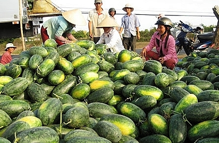 Bộ Công Thương đề nghị dành luồng xanh - luồng ưu tiên cho nông sản khi chính vụ