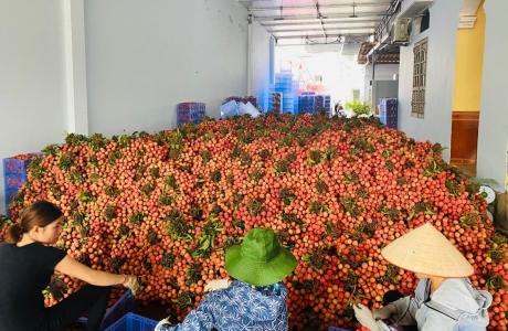 Mở 5 điểm kết nối tiêu thụ nông sản Việt tại Hà Nội