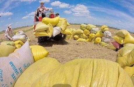 Xuất khẩu gạo giảm 14% trong nửa đầu năm 2021