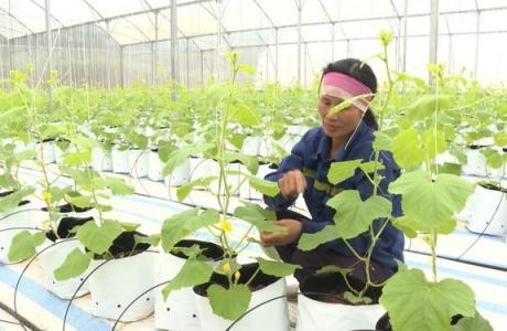Chuyển đổi số trong nông nghiệp: Tạo xung lực phát triển