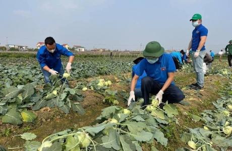 Duy trì sản xuất lương thực thực phẩm các tỉnh phía Bắc