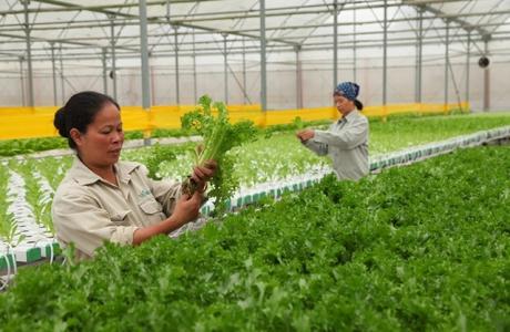 Sản xuất nông nghiệp ứng dụng công nghệ viễn thám ở Hà Nội
