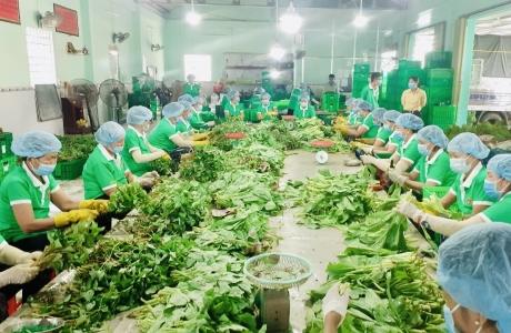 Sáng kiến túi combo 10 kg của Tổ 970, tiêu thụ 1.000 tấn nông sản/ngày