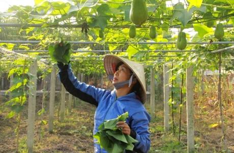 Thúc đẩy nông nghiệp vượt qua đại dịch