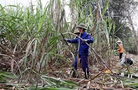 VSSA yêu cầu điều tra chống lẩn tránh thuế nhập khẩu đường từ 5 nước ASEAN