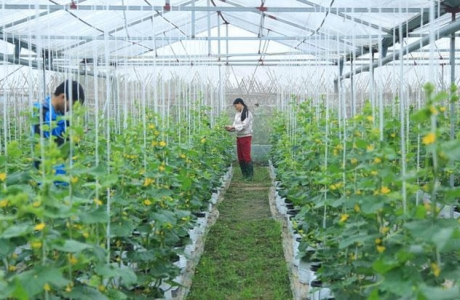 Hà Nội bổ sung gần 49 tỷ đồng để ứng dụng công nghệ cao trong sản xuất nông nghiệp