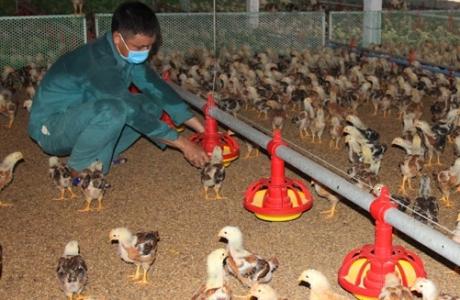 Hà Nội đề nghị xây dựng chợ đầu mối chăn nuôi
