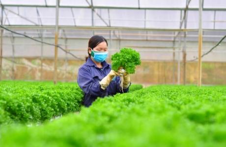 Ngành nông nghiệp quyết đạt mục tiêu xuất khẩu 44 tỷ USD