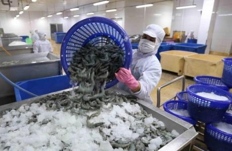 Thủy sản Cà Mau không chỉ tập trung vào thị trường xuất khẩu