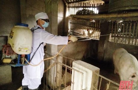 Thanh Hóa: Tiêu hủy 1.193 con lợn bị dịch tả lợn châu Phi