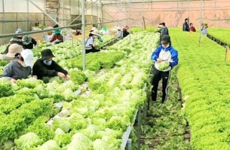 Nông dân Việt và ước mơ về chuỗi cung ứng ngắn