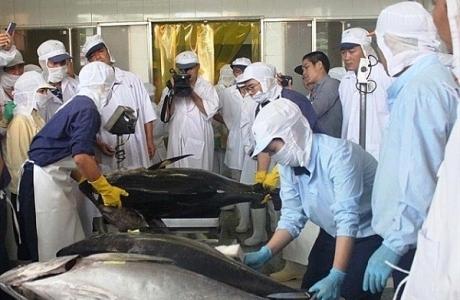 Xuất khẩu cá ngừ Việt Nam giảm 15% trong tháng 9/2021