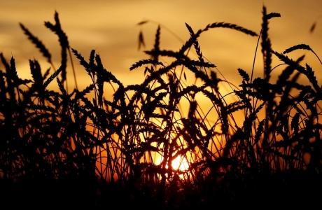 FAO: Giá lương thực thế giới chạm đỉnh 10 năm