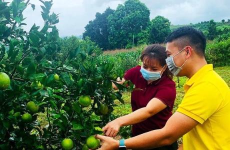 2,5 triệu hộ nông dân Hòa Bình tiếp cận phương thức kinh doanh mới