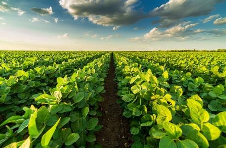 Giải pháp mới loại bỏ vi nhựa trong sản xuất nông nghiệp