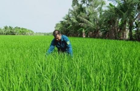 Canh tác lúa thông minh, tiền đề cho chuyển đổi số nông nghiệp
