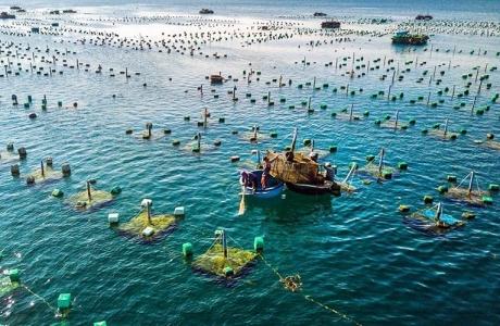 Phê duyệt đề án phát triển nuôi trồng thuỷ sản trên biển đến năm 2030, tầm nhìn đến năm 2045